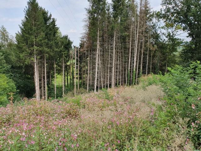 Terrain à bâtir - Gemmenich - #3807882-1