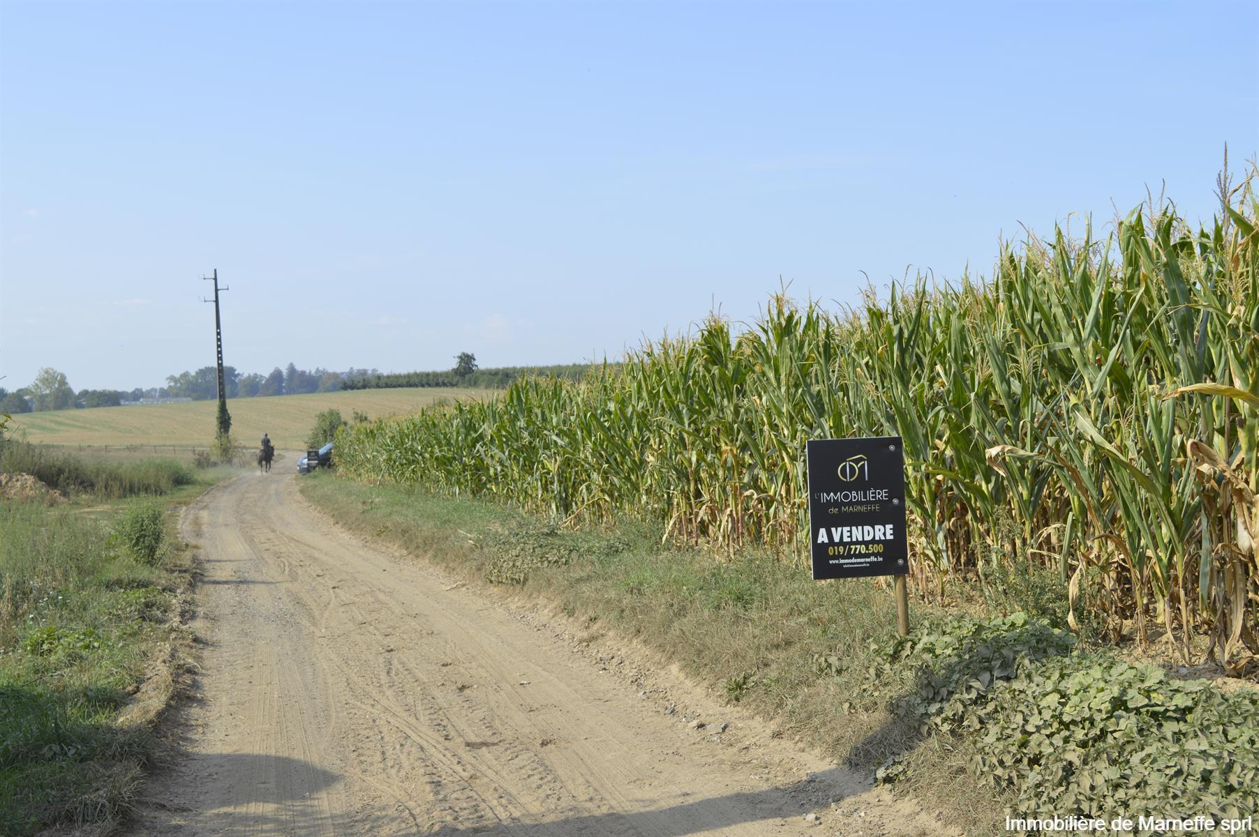Terrain agricole - Burdinne - #4156000-2