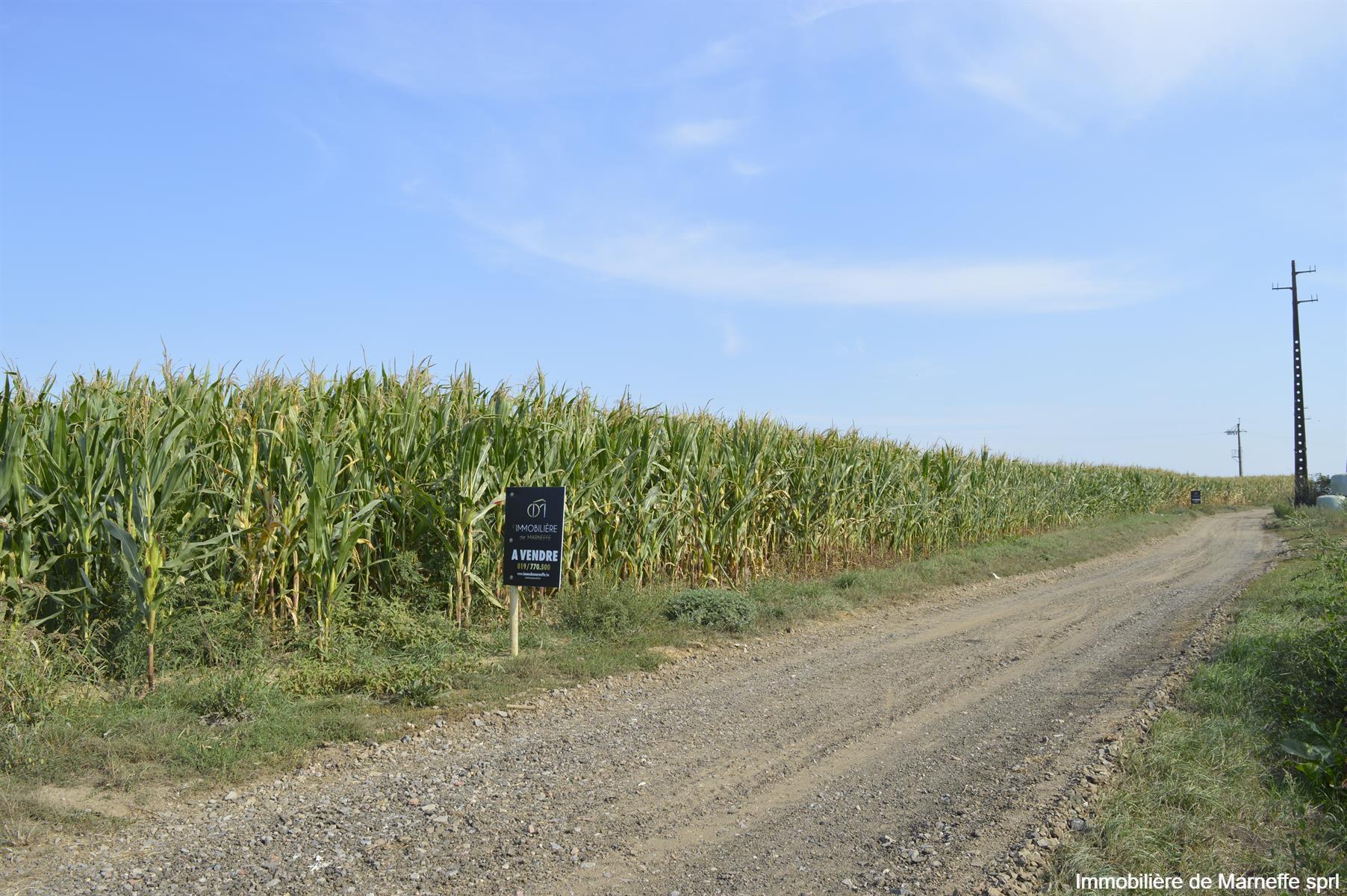 Terrain agricole - Burdinne - #4156000-1