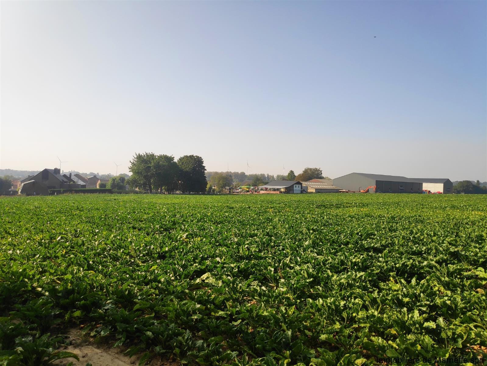 Terrain à bâtir - Berloz - #4163528-10