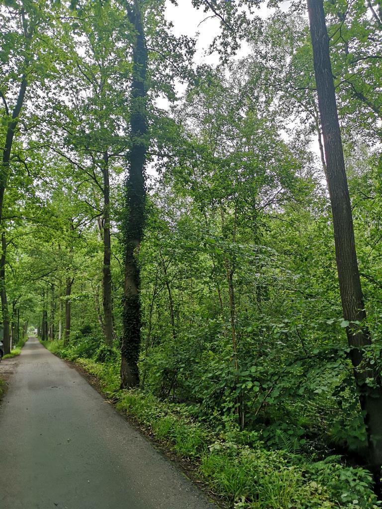 Bos - Hulshout - #4416708-5