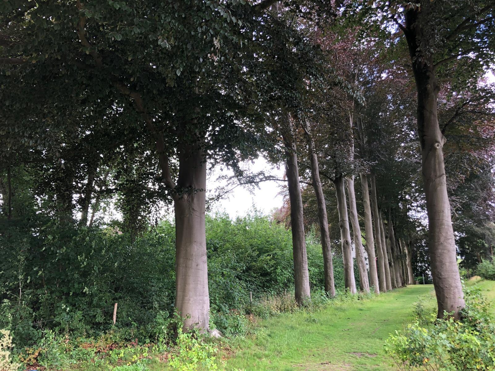 Terrain à bâtir - Ottignies-Louvain-la-Neuve - #4092046-2