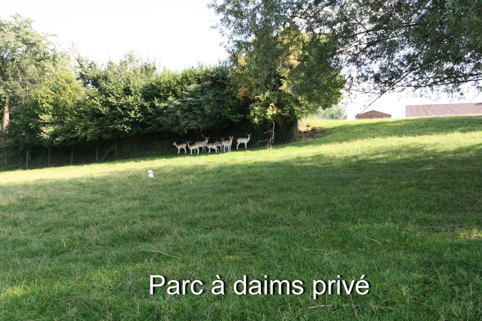 Villa - Lessines Boisde-Lessines - #2103910-8